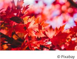 Herbstlaub.png